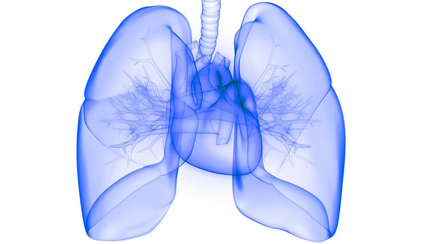 Cœur / Poumons