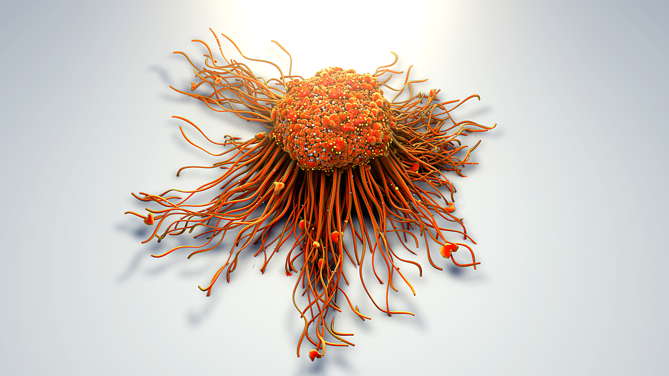 Une équipe internationale identifie une molécule clé dans la régulation du système immunitaire liée à une nouvelle maladie génétique