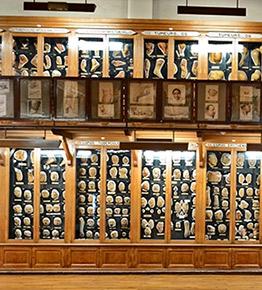 Musée des moulages, hôpital Saint-Louis