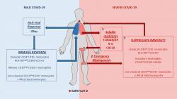 Identification d'une nouvelle cible thérapeutique potentielle contre la COVID-19