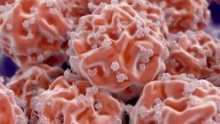 Cellules souche